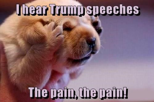 pain,puppy,hear,speeches,trump,caption