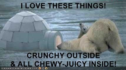 Funny picture of a bear crouching down to get a meal out of that igloo, like an Eskimo.