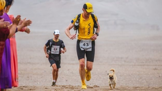 "Scottish runner Leonard was taking part in the 4 Deserts Gobi March 2016, when a small stray dog decided to become his ""running mate""."