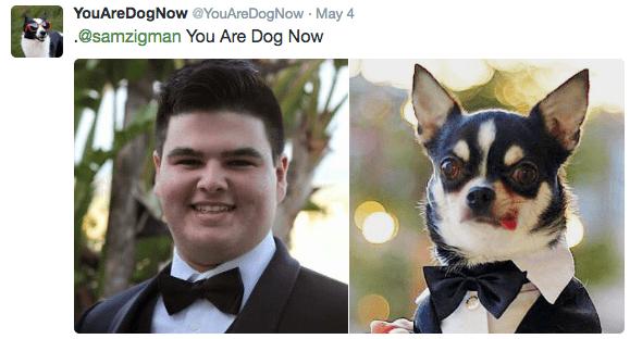 Canidae - YouAreDogNow @YouAreDogNow May 4 @samzigman You Are Dog Now