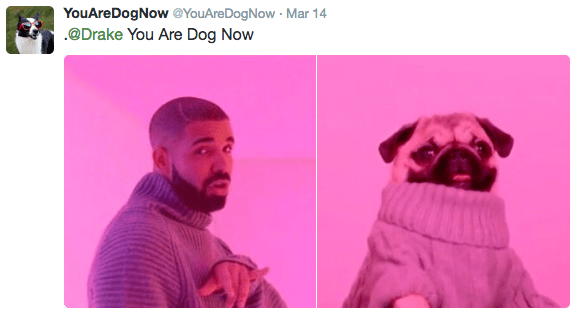 Pink - YouAreDogNow @YouAreDogNow Mar 14 .@Drake You Are Dog Now