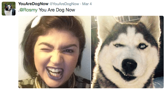 Siberian husky - YouAreDogNow @YouAreDogNow Mar 4 @Rosmy You Are Dog Now