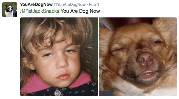 Face - YouAreDogNow@YouAreDogNow Feb 1 .@FatJackSnacks You Are Dog Now