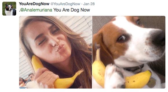 Canidae - YouAreDogNow @YouAreDogNow Jan 28 .@Analemuriana You Are Dog Now