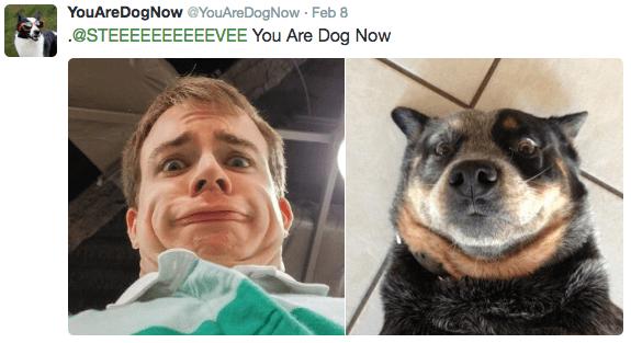 Canidae - YouAreDogNow @YouAreDogNow Feb 8 @STEEEEEEEEEEVEE You Are Dog Now