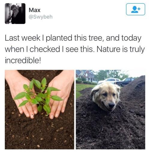 dogs twitter plants garden - 8967449344