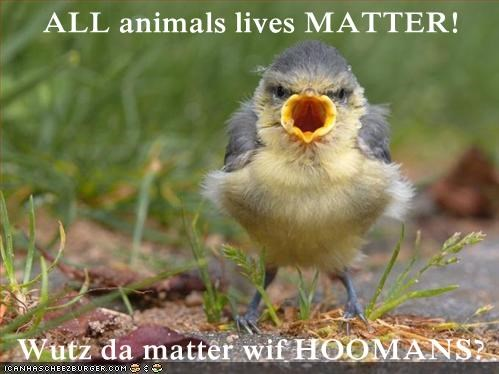 ALL animals lives MATTER!  Wutz da matter wif HOOMANS?