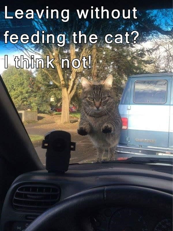 Leaving without feeding the cat?                                   I think not!
