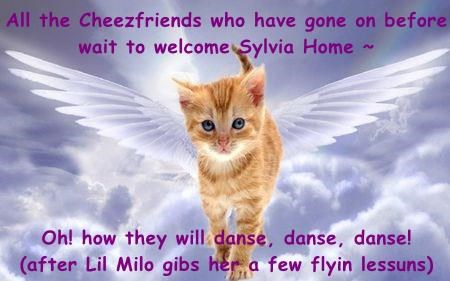 All the Cheezfriends who have gone on before  wait to welcome Sylvia Home ~   Oh! how they will danse, danse, danse!  (after Lil Milo gibs her a few flyin lessuns)