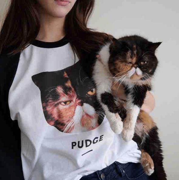 Cat - PUDGE