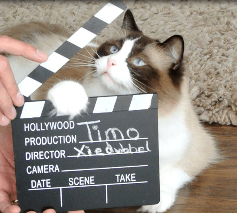 Cat - Tima HOLLYWOOD PRODUCTION DIRECTOR Xe dohel CAMERA TAKE SCENE DATE