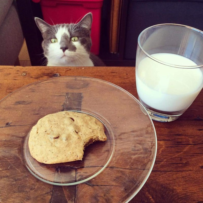 i can has cookie