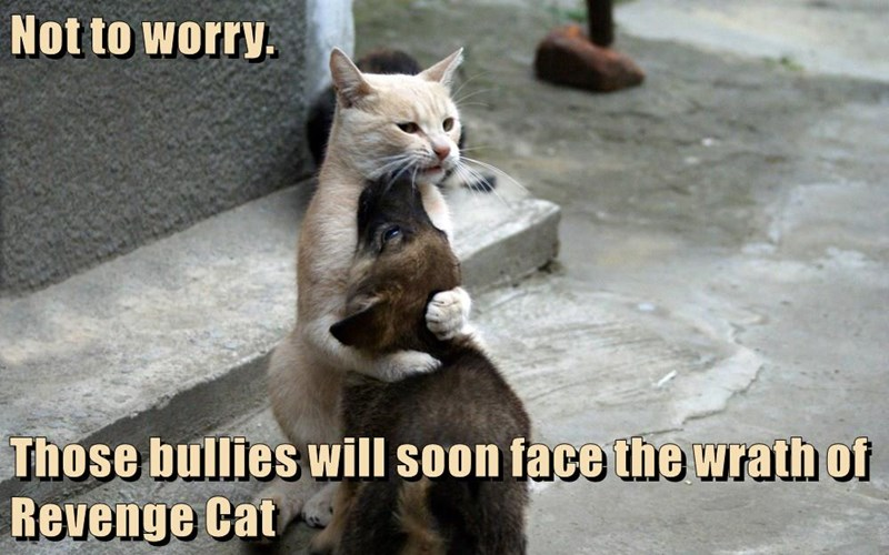 cat,dogs,face,worry,bullies,revenge,not,caption