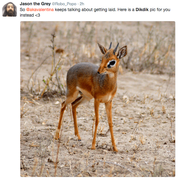 Vertebrate - Jason the Grey @Robo_Popo 2h So @akavalentina keeps talking about getting laid. Here is a Dikdik pic for you instead <3