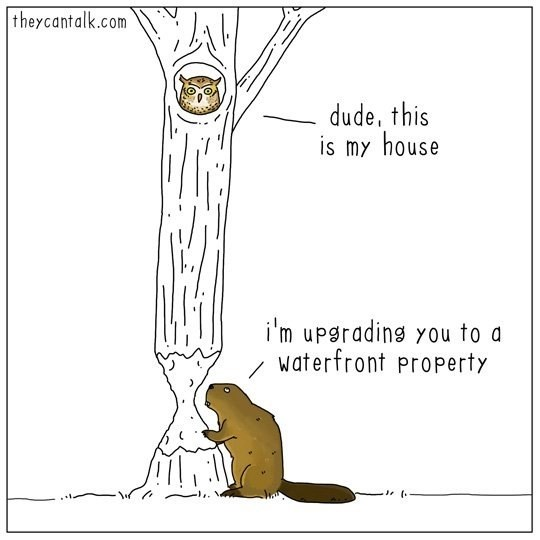 web comics puns beaver I Don't Give a Dam About the Waterfront!