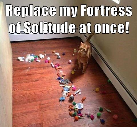cat,solitude,replace,fortress,at once,caption
