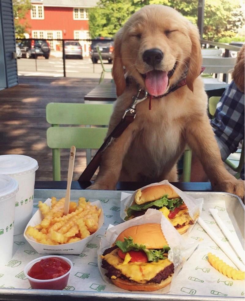shake shack makes everyone this happy