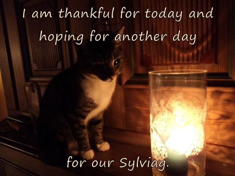 I am thankful for today and hoping for another day  for our Sylviag.