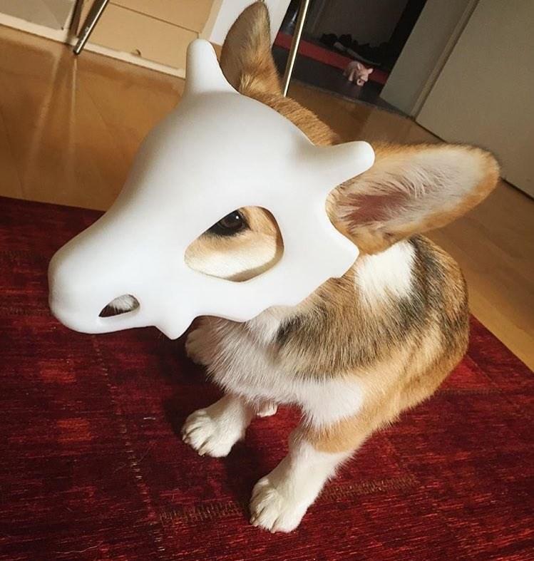 dogs Pokémon cubone corgi funny - 8968099328