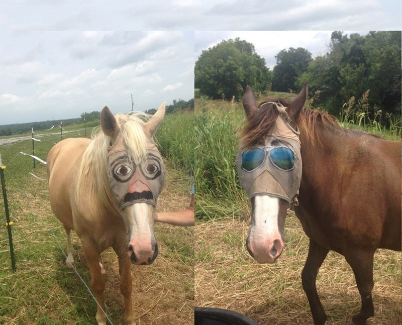 when youre a horse but you still want to look fly