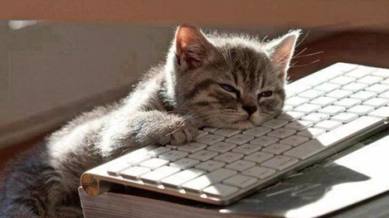trending national lazy day internet holiday