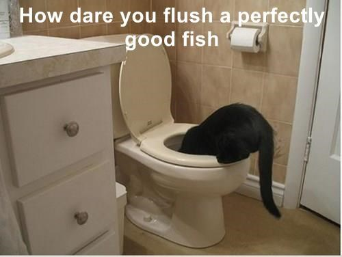cat,goldfish,flush,dare,perfectly,good,caption