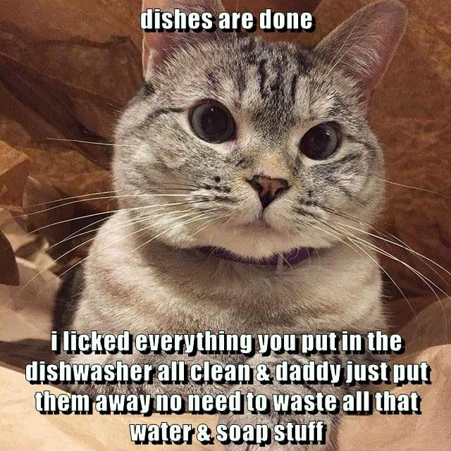 cat dishwasher done soap waste caption dishes licked - 8968540672