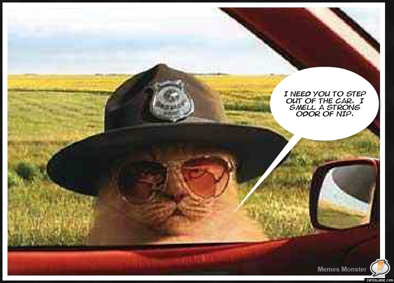 Cop Kitty smells narcotics