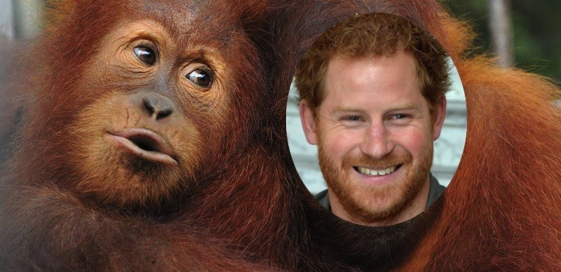 redhead primates zoo access free day orangutan england