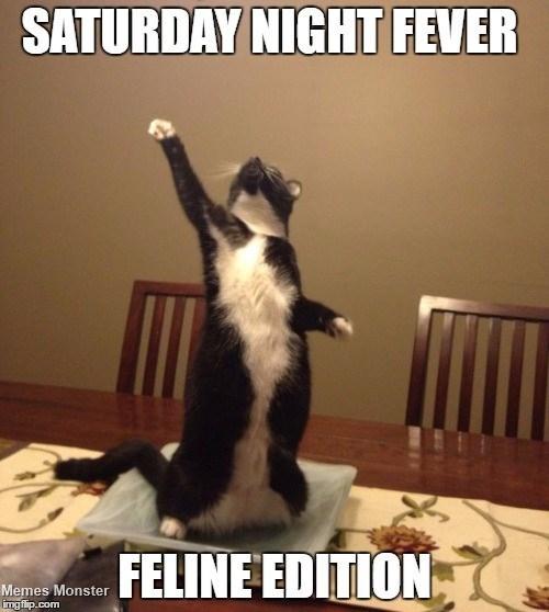 Saturday night fever feline edition.