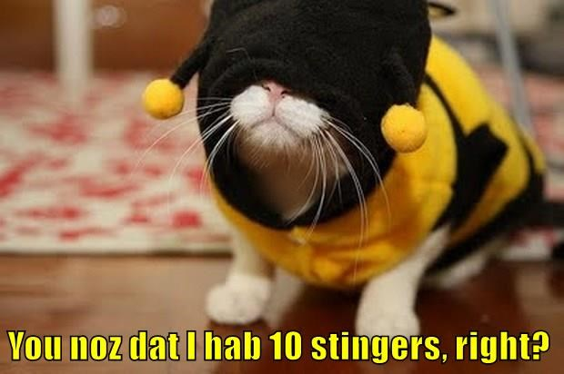 You noz dat I hab 10 stingers, right?