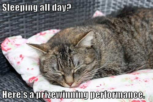 Sleeping all day?  Here's a prizewinning performance.
