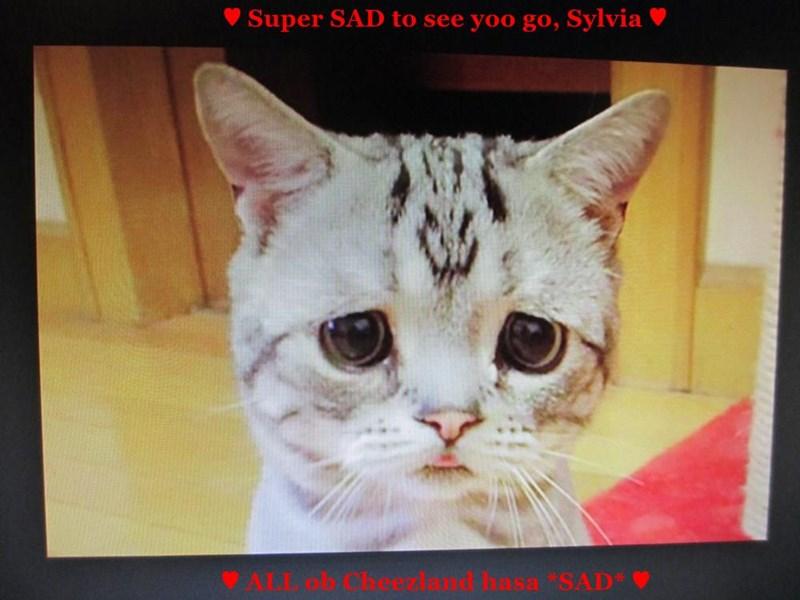♥ Super SAD to see yoo go, Sylvia ♥             ♥ ALL ob Cheezland hasa *SAD* ♥