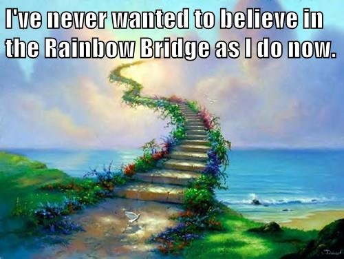 I've never wanted to believe in the Rainbow Bridge as I do now.