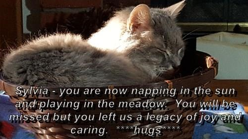 Sylvia - you are now napping in the sun and playing in the meadow.  You will be missed but you left us a legacy of joy and caring.  ****hugs****