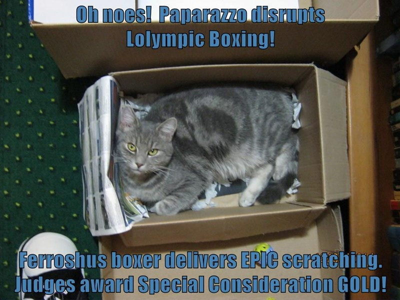 Oh noes!  Paparazzo disrupts                            Lolympic Boxing!  Ferroshus boxer delivers EPIC scratching.  Judges award Special Consideration GOLD!