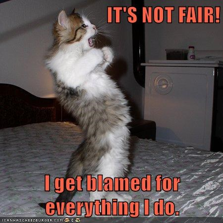 IT'S NOT FAIR!  I get blamed for everything I do.