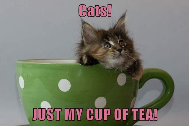 Cats!   JUST MY CUP OF TEA!
