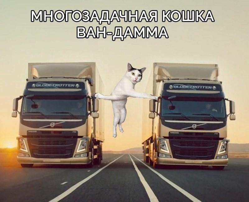 photoshop battle - Transport - МНОГОЗАДАЧНАЯ КОШКА ВАН-ДАММА GLDDETROTTER LODETROTTER