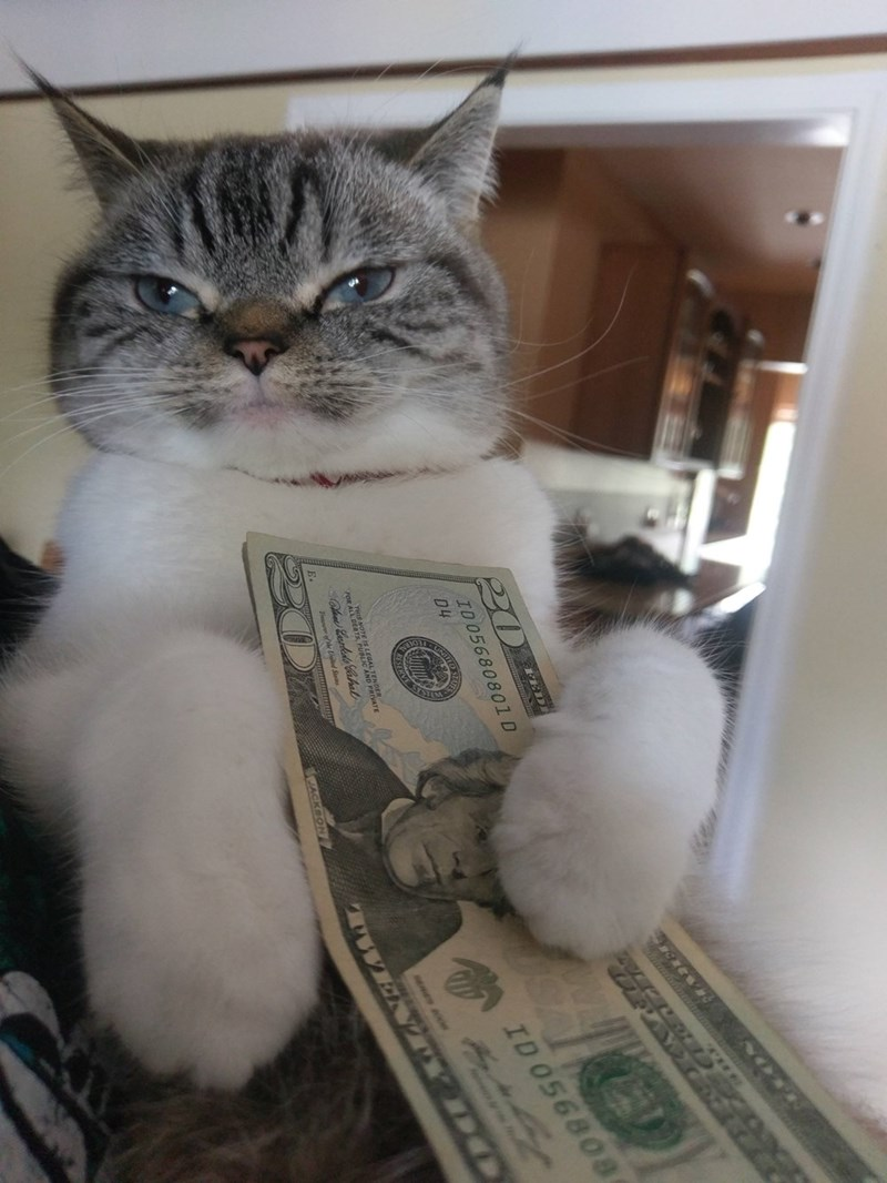 when your cat has more money than you