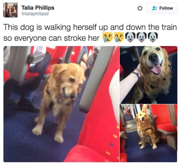 dogs,twitter,train
