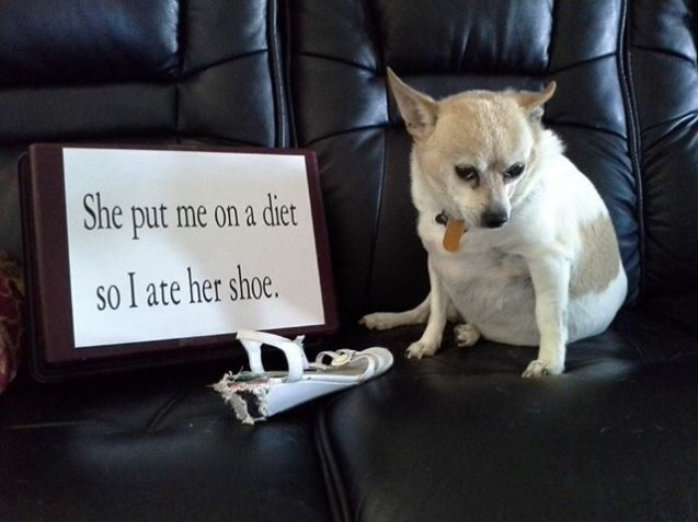 dogs shame confession shoe