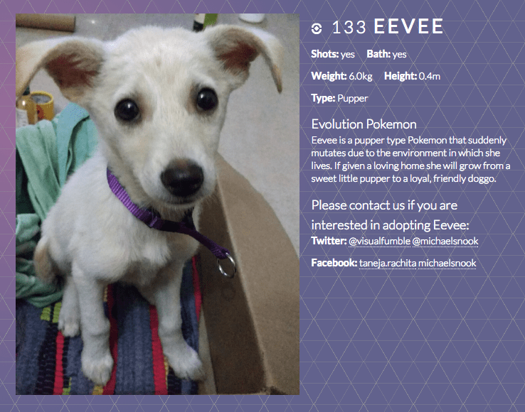 woman in india rescues dog names her eevee creates pokemon go website to get her adopted