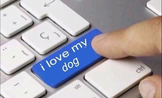 wholesome meme - Computer keyboard - i love my dog alt ciri