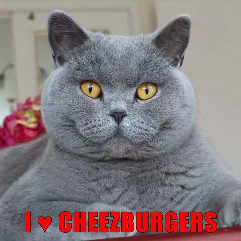I ♥ CHEEZBURGERS