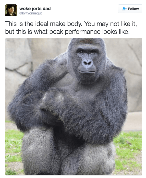 Western lowland gorilla - woke jorts dad @kvltvonnegut Follow This is the ideal make body. You may not like it, but this is what peak performance looks like.