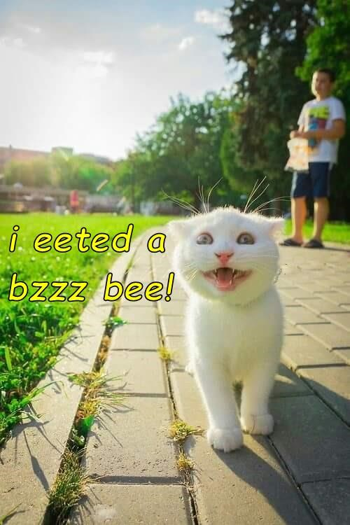 cat bee eated caption - 8970071040