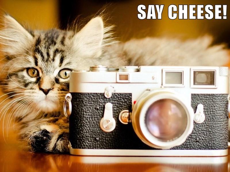 Cheezburger Image 8970130176
