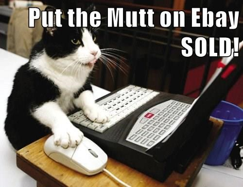 cat mutt sold caption ebay - 8970141440