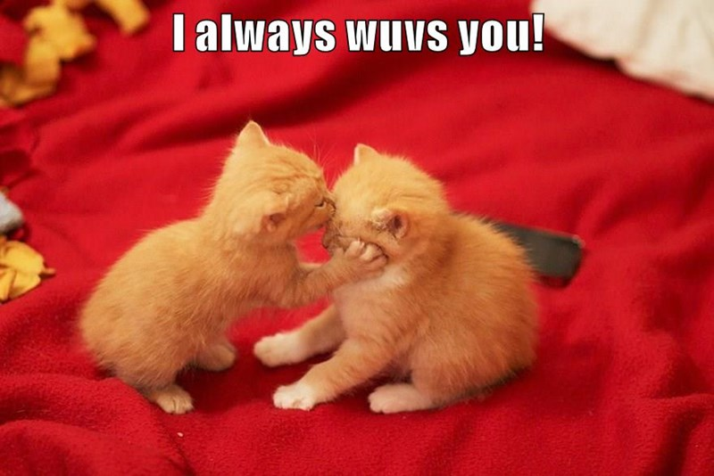 you always kitten love caption - 8970154752